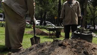 Informa Sedema restitución de arbolado en Parque Winston Churchill